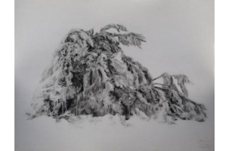 """naturaleza """"arbusto nevado"""""""