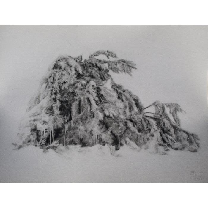 Arbusto nevado