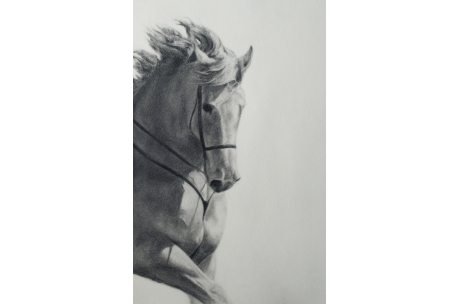 "animales ""caballo"""