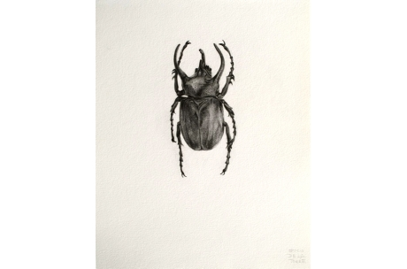 """escarabajo """"Ciervo volante"""""""