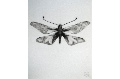 "libélula ""Coccajus"""
