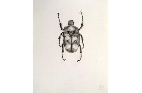 """escarabajo """"Irritante"""""""