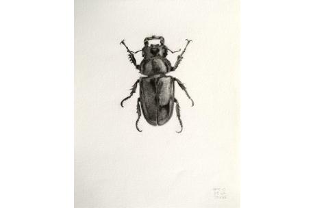 """escarabajo """"Lamenicornio"""""""