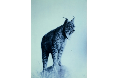 "animales ""lince"""