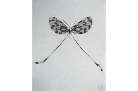 """libélula """"Sinuata"""""""