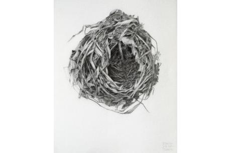 """nido """"de Ruiseñor"""""""