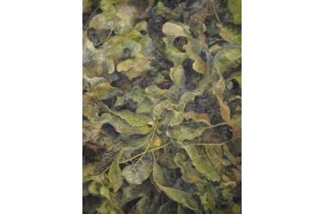 naturaleza algas marinas óleo