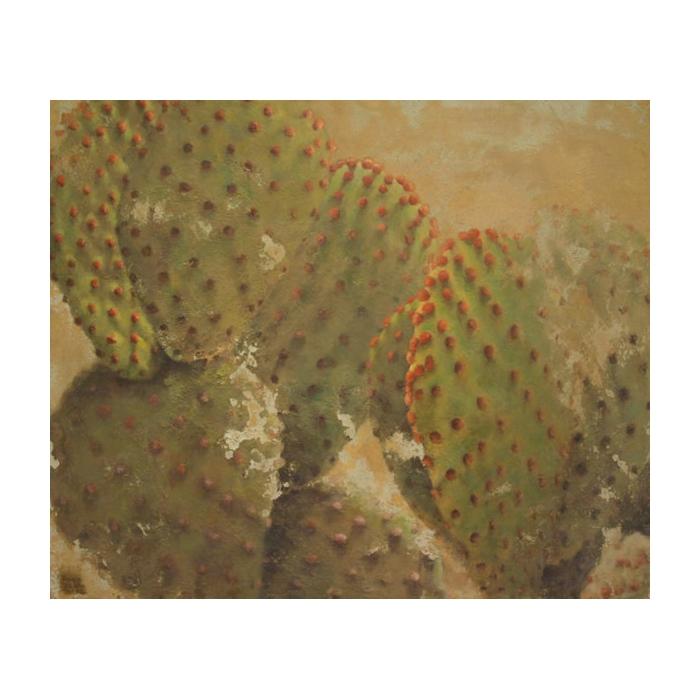 cactus orejas de conejo