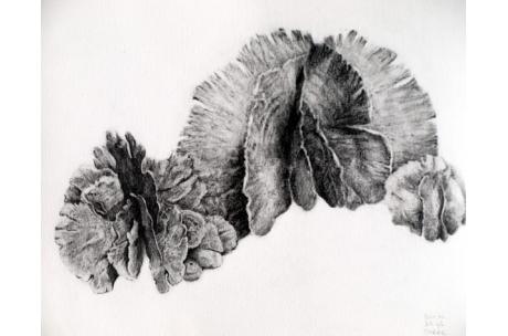 naturaleza alga marina abanico de sirena