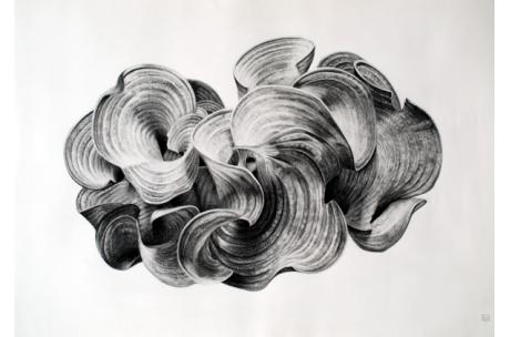 naturaleza alga marina flabelada blanca