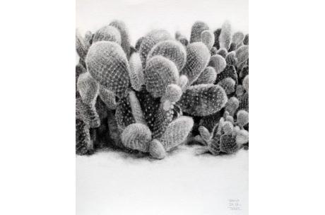 naturaleza cactus alas de angel