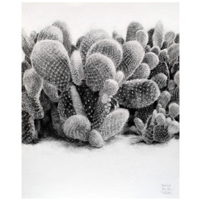 Cactus Alas de angel