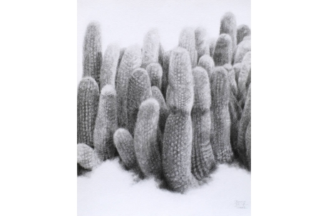naturaleza cactus antorcha de plata