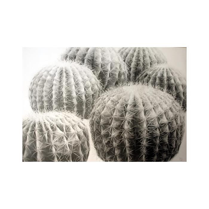 Cactus Bolas de oro drawing 100x70