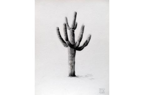 naturaleza cactus cardon gigante