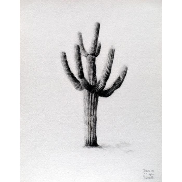 Cactus cardón gigante