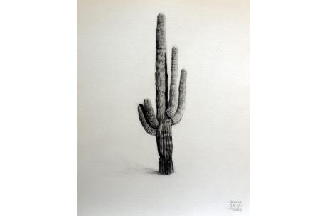 naturaleza cactus saguaro