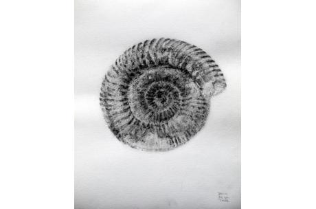 naturaleza fósil ammonite