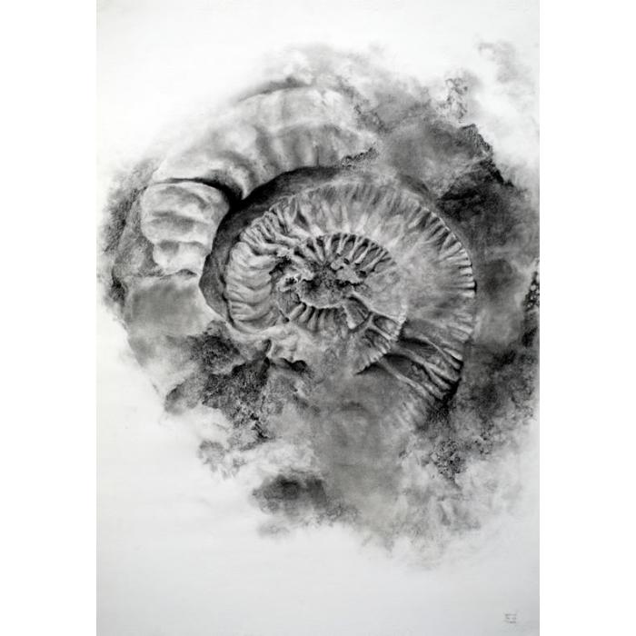 fósil en su interior dibujo 100x70