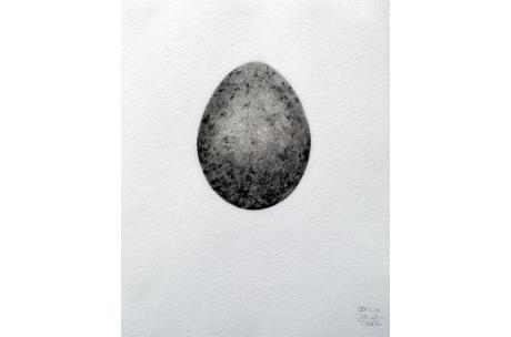 naturaleza huevo alimoche