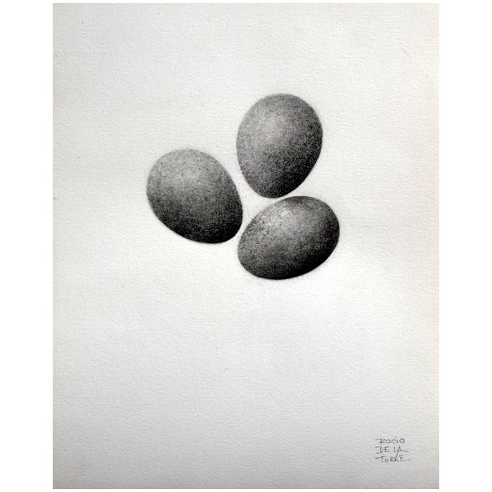 huevos de petirrojo dibujo
