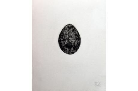 naturaleza huevos urogallo