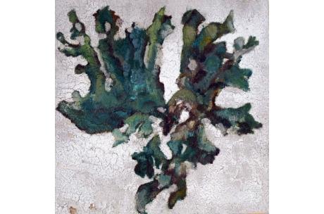 alga verde