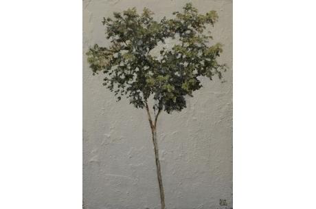 proyecto de árbol